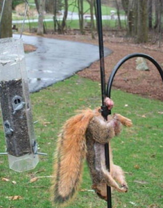 Bank  posts photo of squirrel with testicles caught